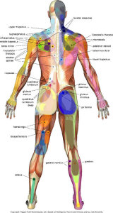 pain trigger points